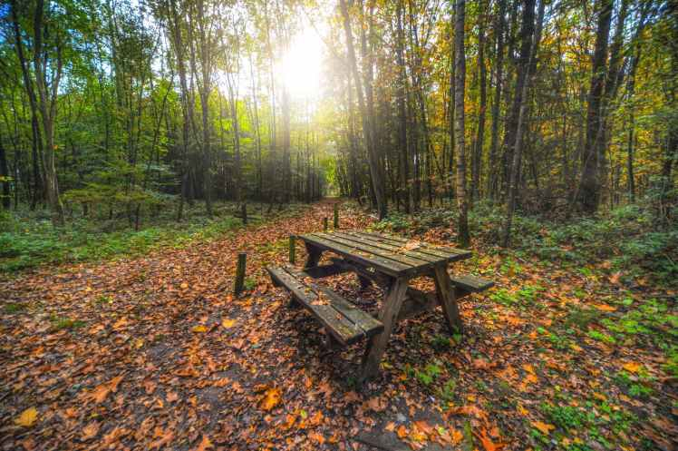 wooden bench in forest nature park