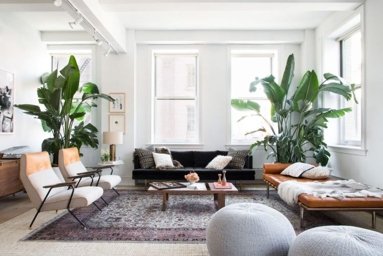 Cute-Living-Room-Plants